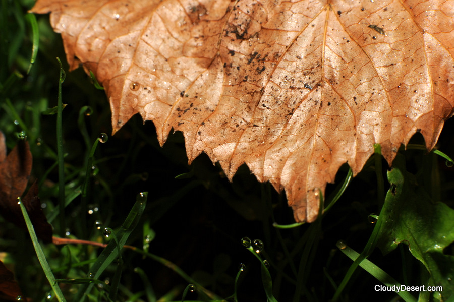 Wet leaf on the ground