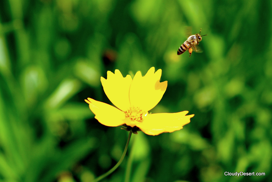 A bee flying off from a flower.