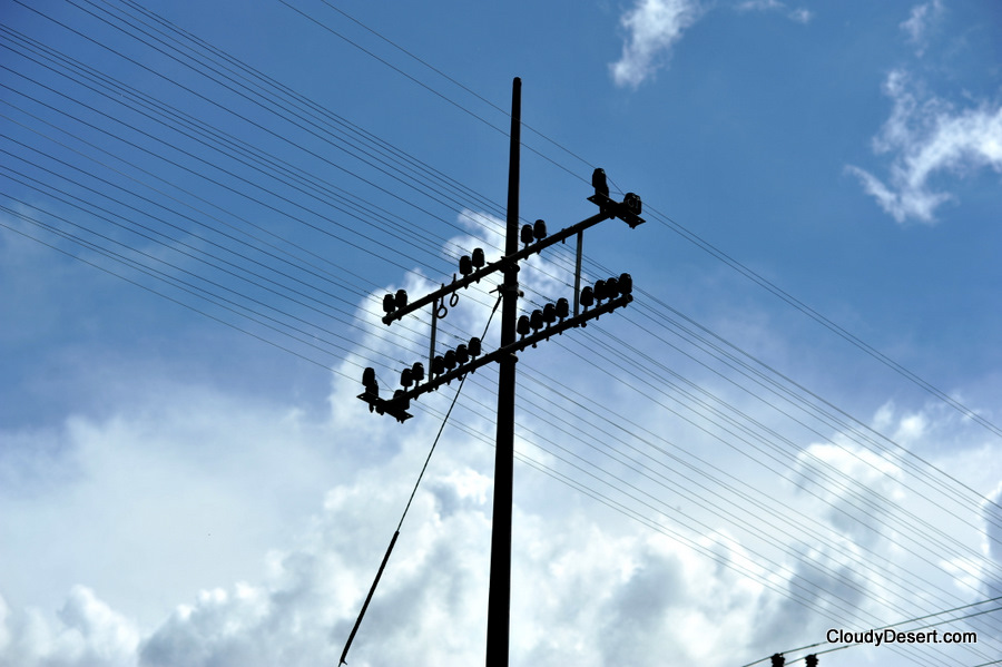 The telegraph pole